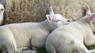 Impression Bob Bakker vleesverwerking BV Handel in vee & vlees