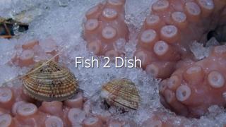 Impression Fish 2 Dish